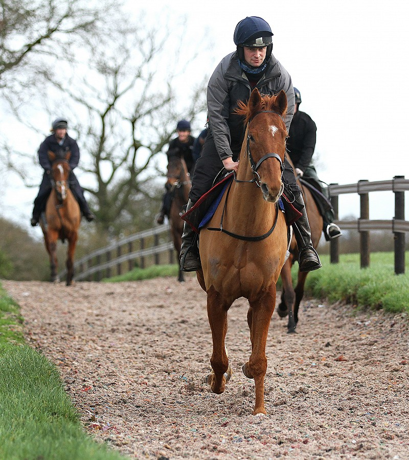 Canter Carpet on gallops race horses, arena, turnout, weather resistant equestrian surface